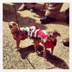 Lola and Delores stole the show.  Their owner hand sewed these costumes himself.